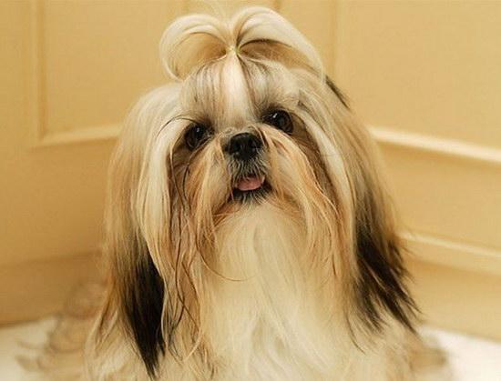 狗的寿命是多少年 狗狗寿命最长是多少年