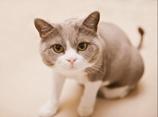 猫咪上厕所平安彩票开奖直播网视频
