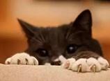 猫咪剪指甲视频