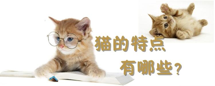 猫的特点有哪些