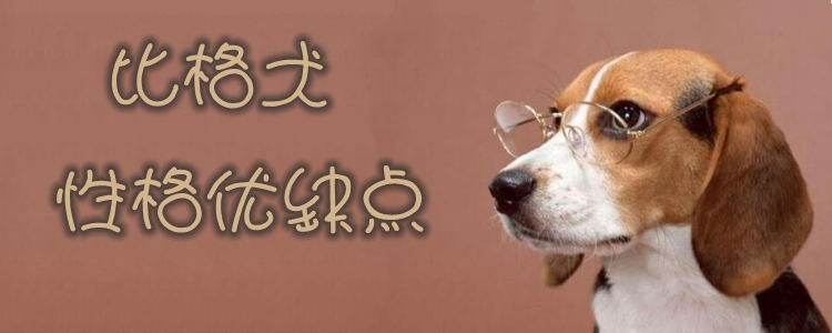 比格犬性格优缺点有哪些 比格犬优点缺点介绍