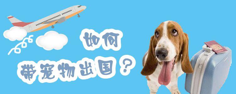 如何带宠物出国