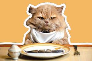 如何自制猫粮 自制猫粮的三个方法