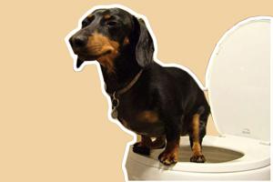 如何训练狗狗大小便