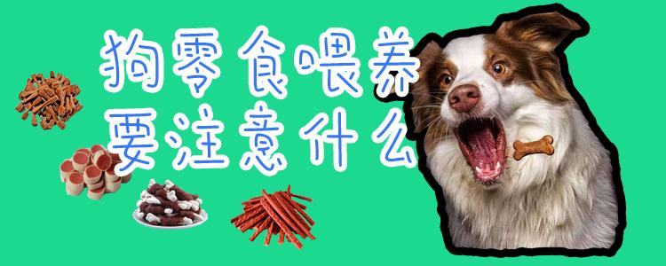 狗零食喂食要注意什么插图