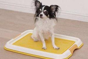 狗狗训练大小便步骤有哪些