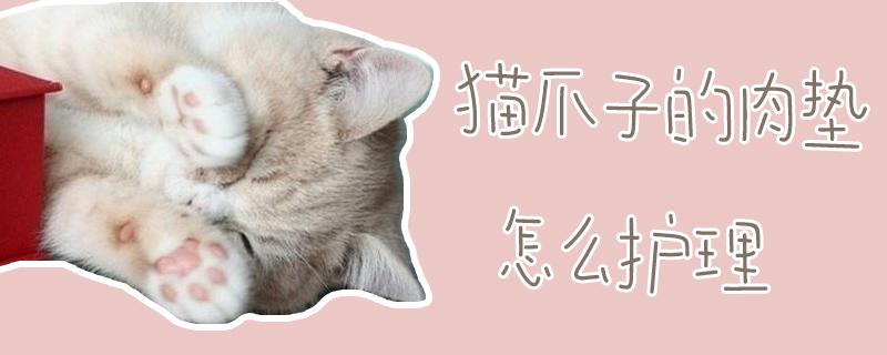 猫爪子的肉垫怎么护理