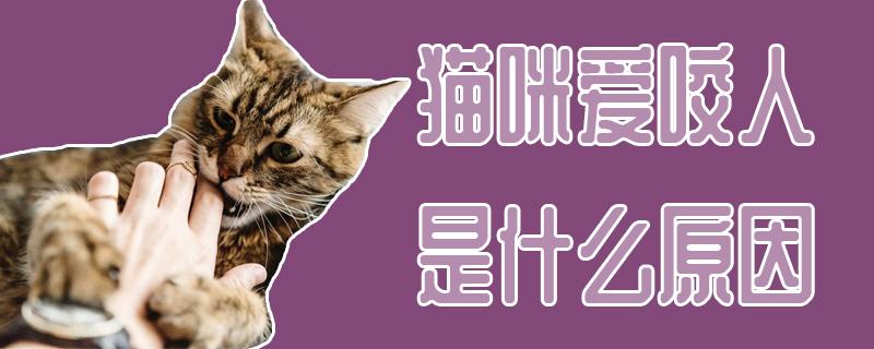 猫咪爱咬人是什么原因插图