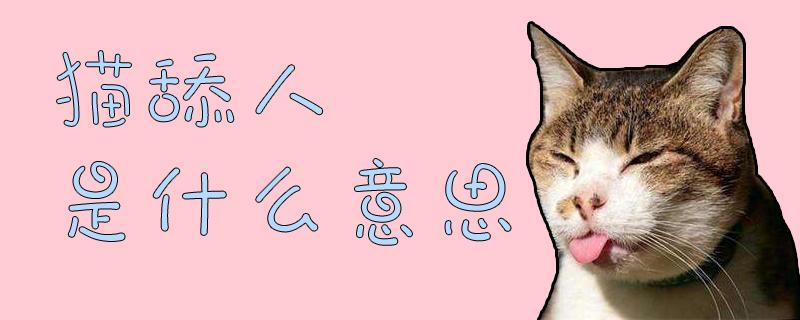 猫舔人是什么意思插图
