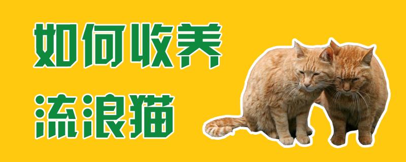 如何收养流浪猫