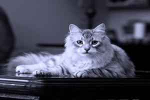 猫咪为什么吃不胖