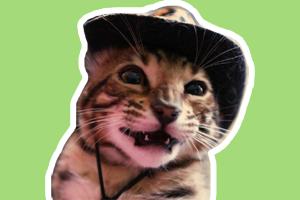 孟加拉豹猫怎么饲养