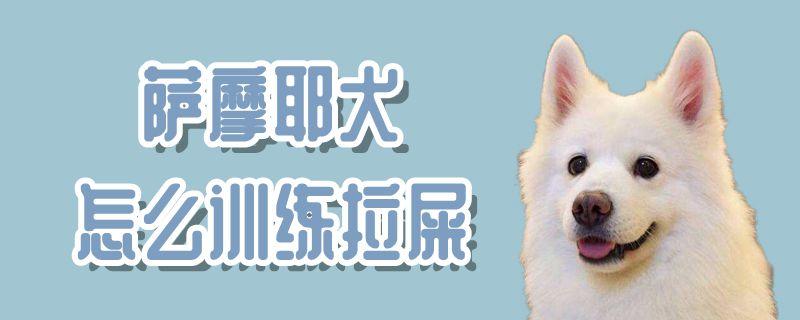 萨摩耶犬怎么训练拉屎-轻博客
