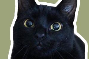 孟买猫不能吃什么