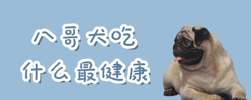 八哥犬吃什么最健康插图