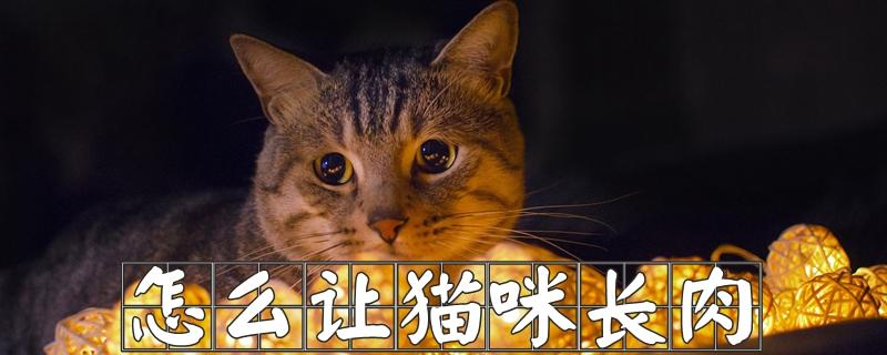 怎样让猫咪长肉插图(1)