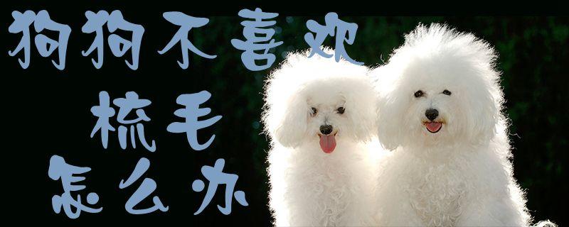 狗狗不喜欢梳毛怎么办插图