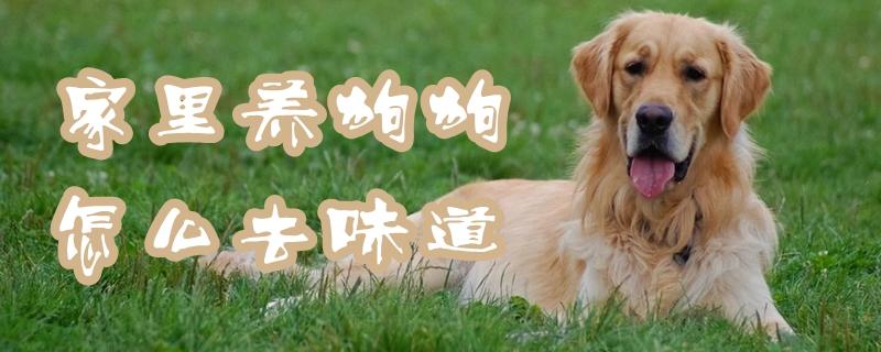 家里养狗狗怎样去滋味插图
