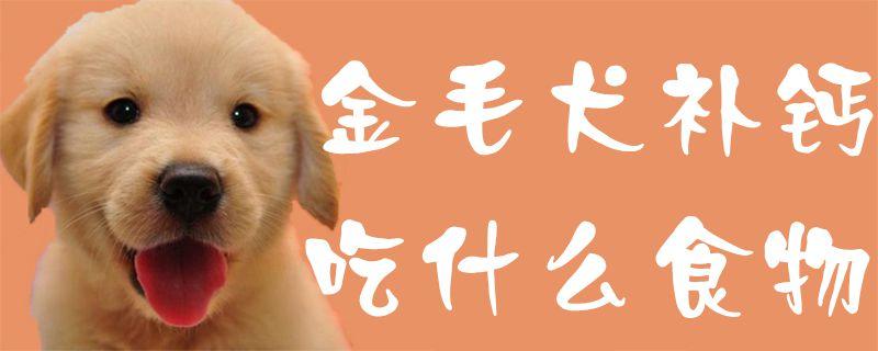 金毛犬补钙吃什么食物插图