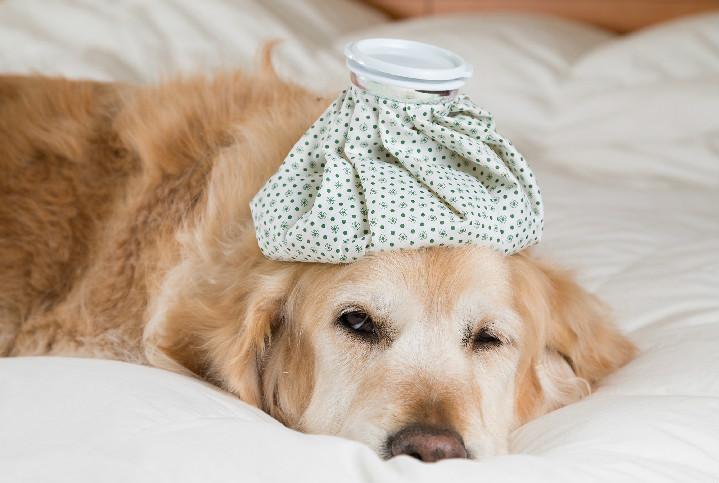 狗狗感冒吃什么药 如何治疗狗狗感冒