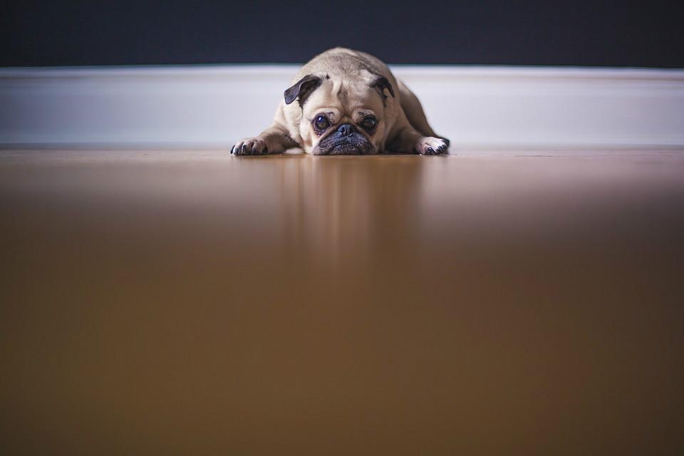 狗狗感冒需要注意什么 怎么做狗狗恢复更快