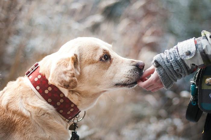 狗狗呕吐拉稀怎么办 这些常见状况应对方法一定要了解