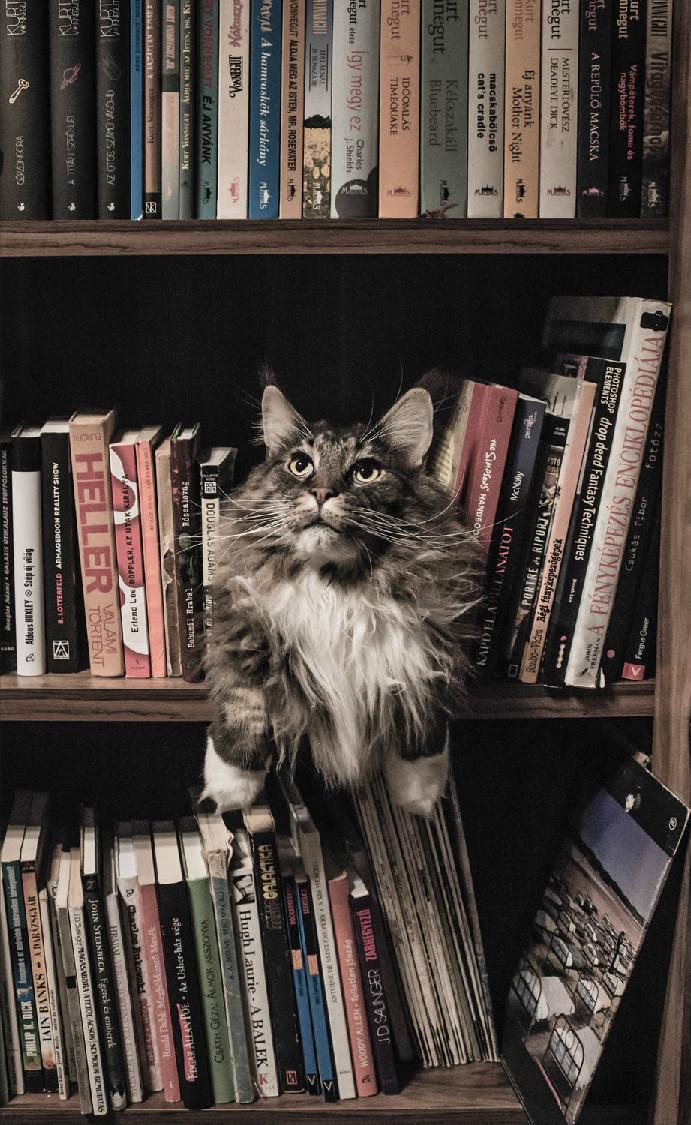 猫没打疫苗可以绝育吗