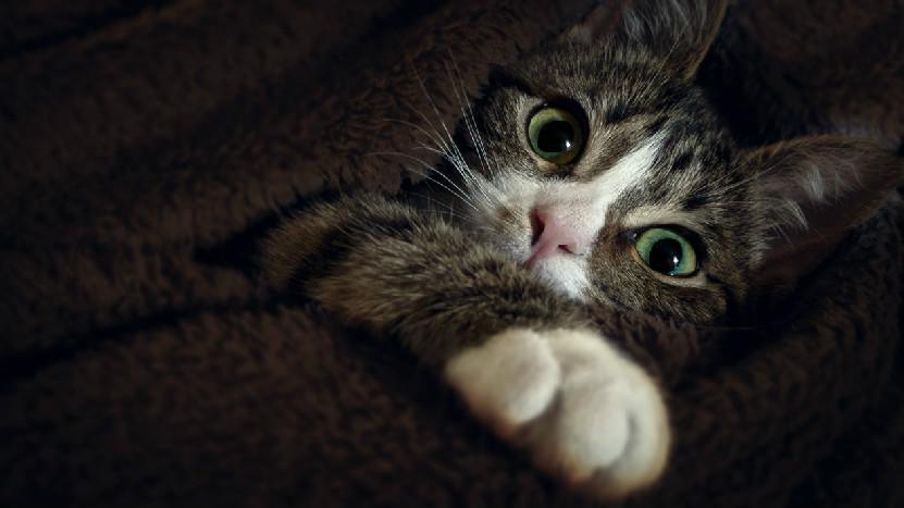 猫呛到了怎么办