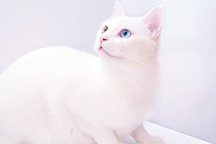 猫咪生化检查是什么