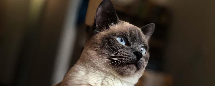 猫咪打喷嚏但是很活泼 猫咪打喷嚏但是很活泼怎么办