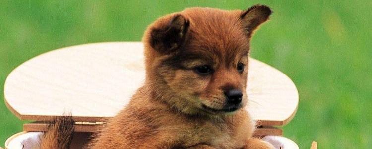 狗扭伤和骨折的区别 狗扭伤了怎么办