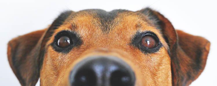 狗狗大便后有几滴鲜血 狗狗便血的原因