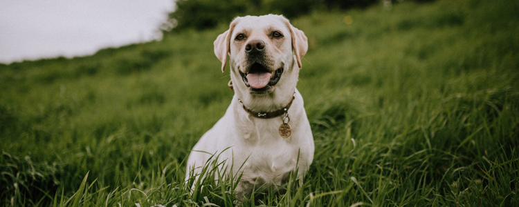 狗狗感冒症状和细小的区别解读 避免因误判而让狗狗翘翘