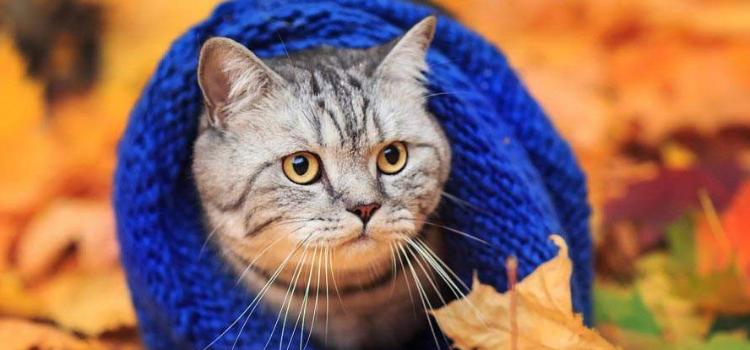 猫需要穿衣服吗 给猫穿衣服为什么猫会摔倒?