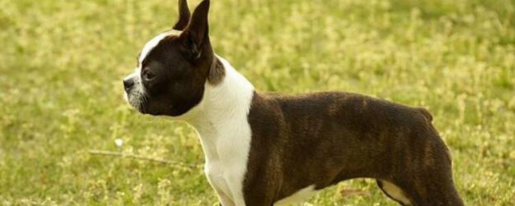 怎么预防狗狗中暑 这几个方法让狗狗快乐度过夏天