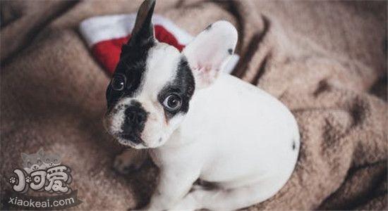 狗狗尿骚味很大怎么办 怎么去除家里的尿骚味插图