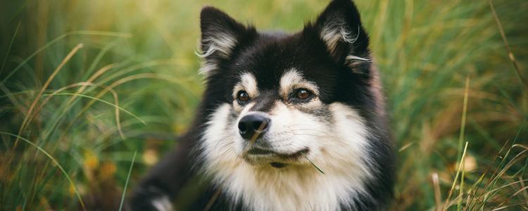 狗狗外耳炎如何治疗 狗狗外耳炎在家治疗方法