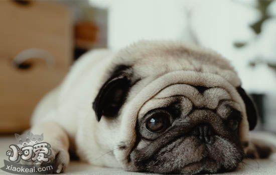 狗为什么喜欢舔主人 狗狗舔主人的潜台词你该明白了