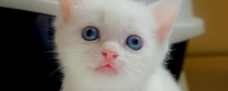 怎么延长猫的寿命 这四点非常简单