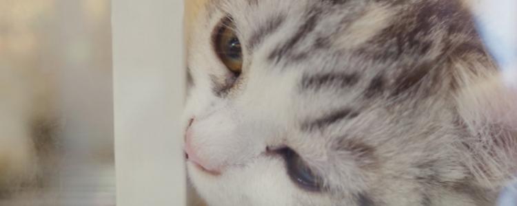 养猫咪的日常常识 饲养猫咪不可忽略的五点常识!