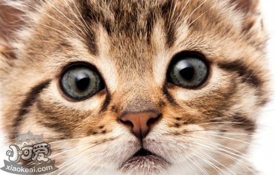 怎么样让猫咪喜爱主人 想要猫咪爱上你请做出以下几点吧!插图(1)