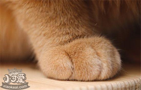 猫咪脚毛怎样修剪 猫咪多久需求剪一次脚毛插图(3)