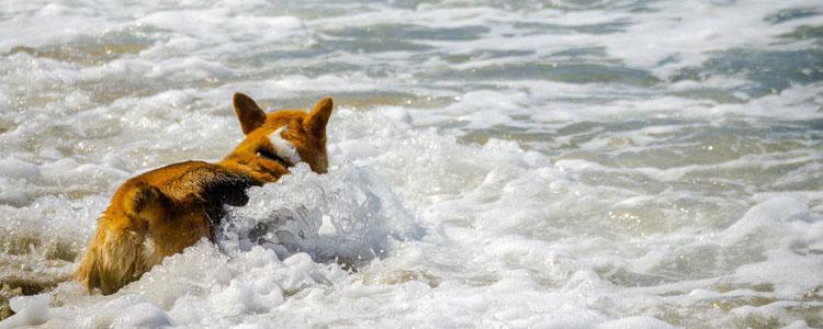 狗狗行为突然很怪异的原因 狗狗行为你知道背后的原因吗