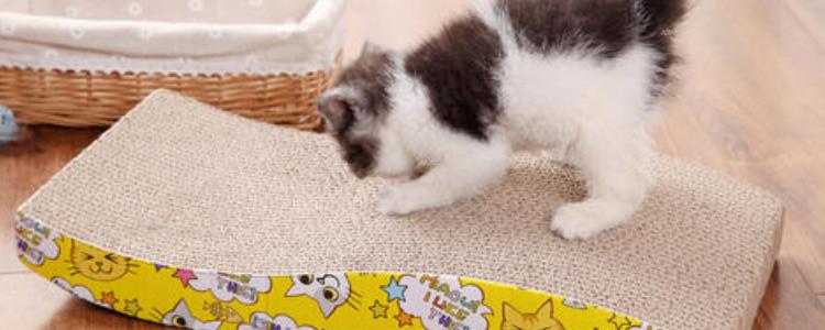 猫玩具制作  自制猫抓板