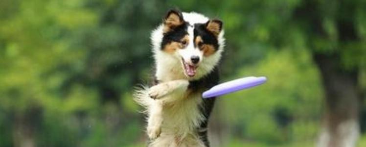 狗的玩具有哪些 狗玩具图片