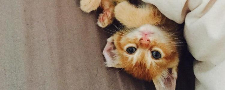 捡了流浪猫怎么处理 要准备什么东西