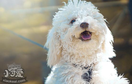 给狗狗洗澡进程 简略易操作的教程插图(2)