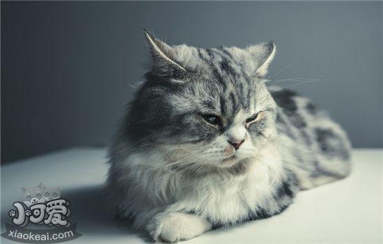 怎样给猫咪喂驱虫药 给猫咪喂驱虫药的三个小窍门插图(1)