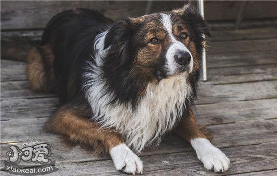 狗狗沐浴露怎样选 教你怎么挑选适宜的沐浴露插图