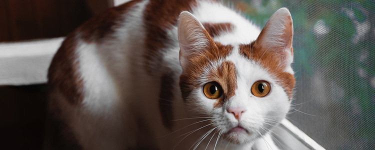 猫白内障是怎么引起的 关于白内障你不知道的事